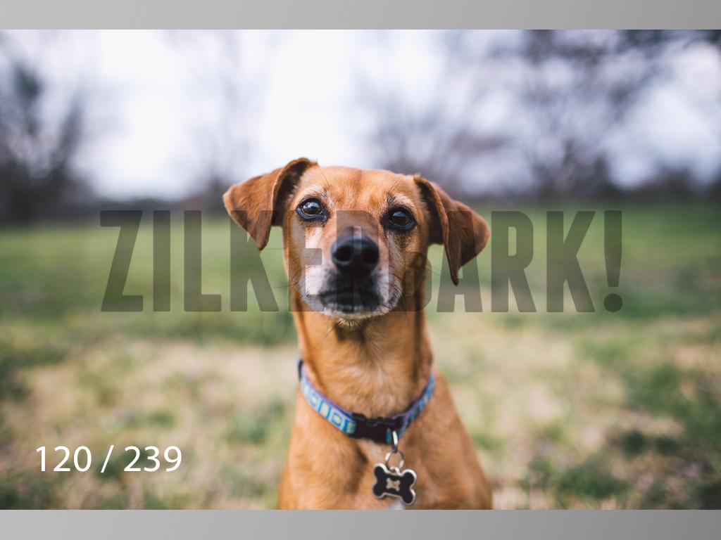 2.20 Dogs-120.jpg