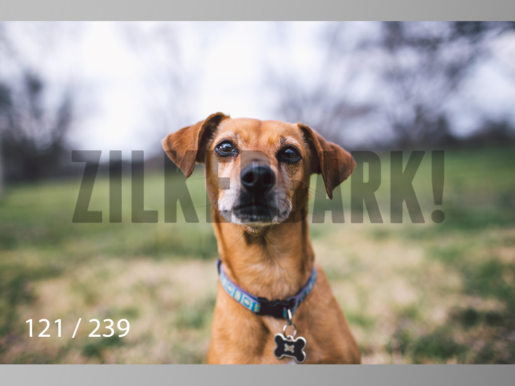 2.20 Dogs-121.jpg