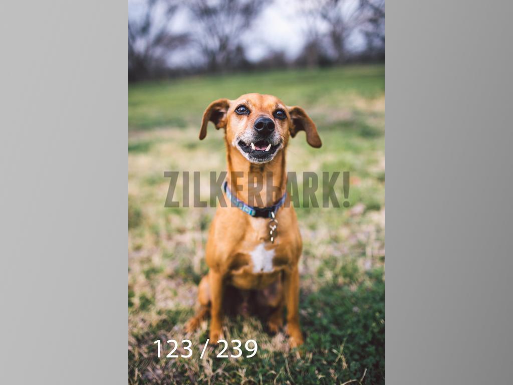 2.20 Dogs-123.jpg