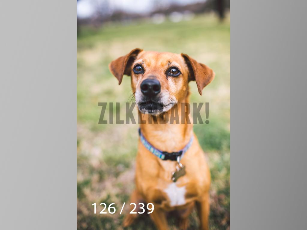 2.20 Dogs-126.jpg