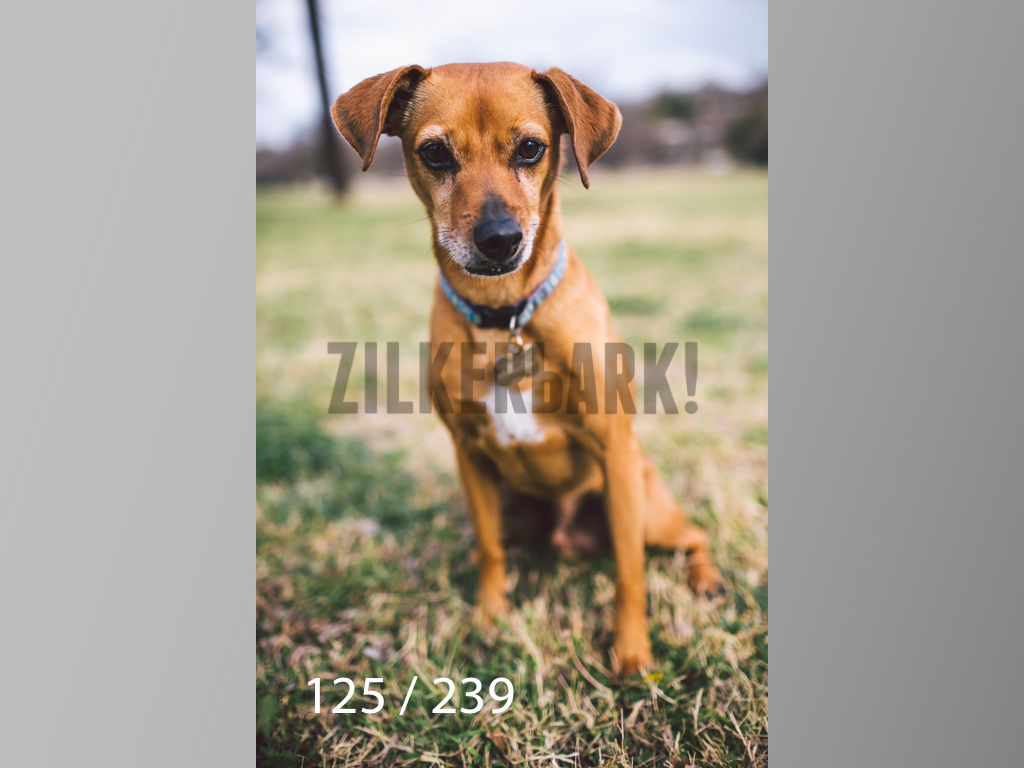 2.20 Dogs-125.jpg