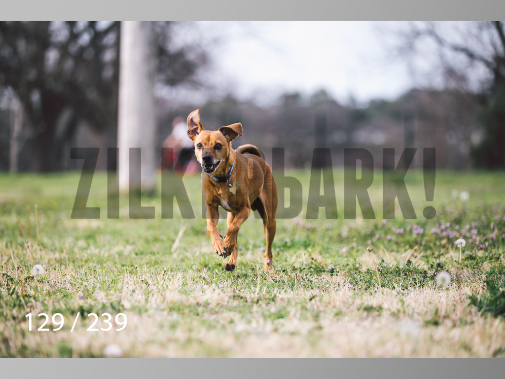 2.20 Dogs-129.jpg