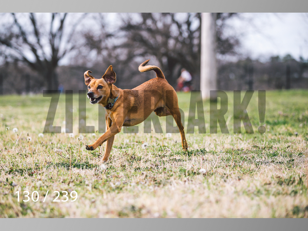 2.20 Dogs-130.jpg
