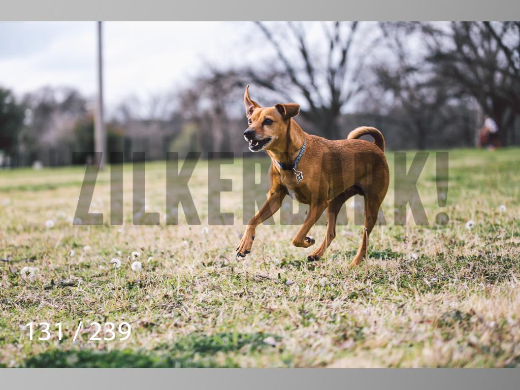 2.20 Dogs-131.jpg