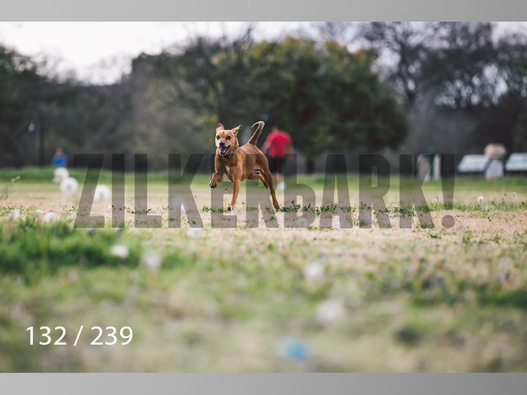 2.20 Dogs-132.jpg