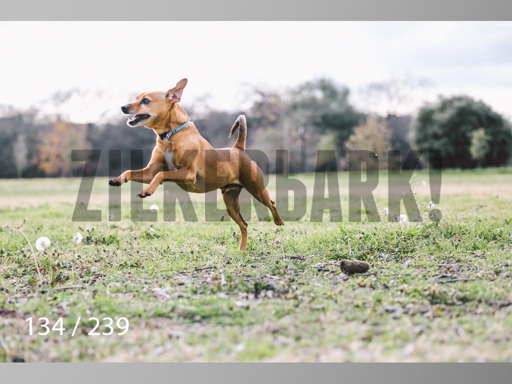 2.20 Dogs-134.jpg