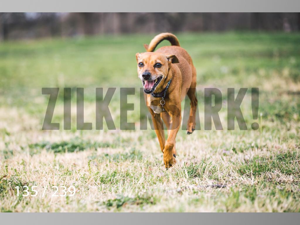 2.20 Dogs-135.jpg