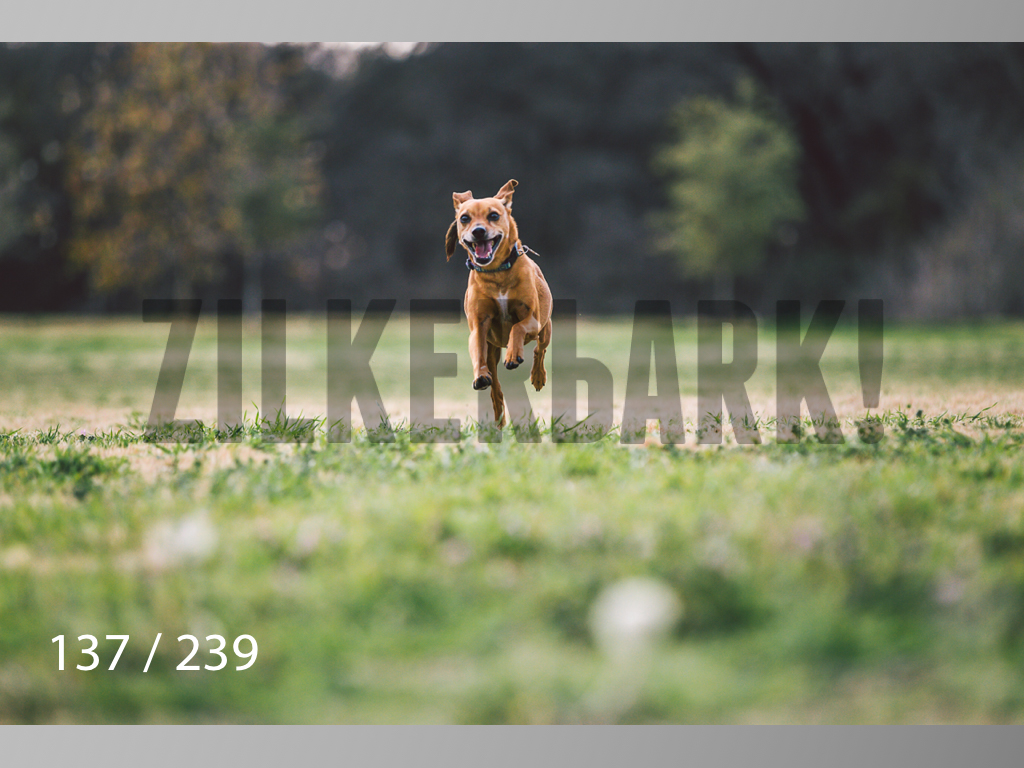 2.20 Dogs-137.jpg