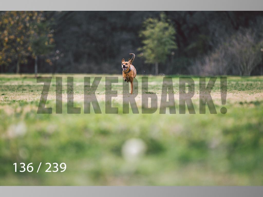 2.20 Dogs-136.jpg