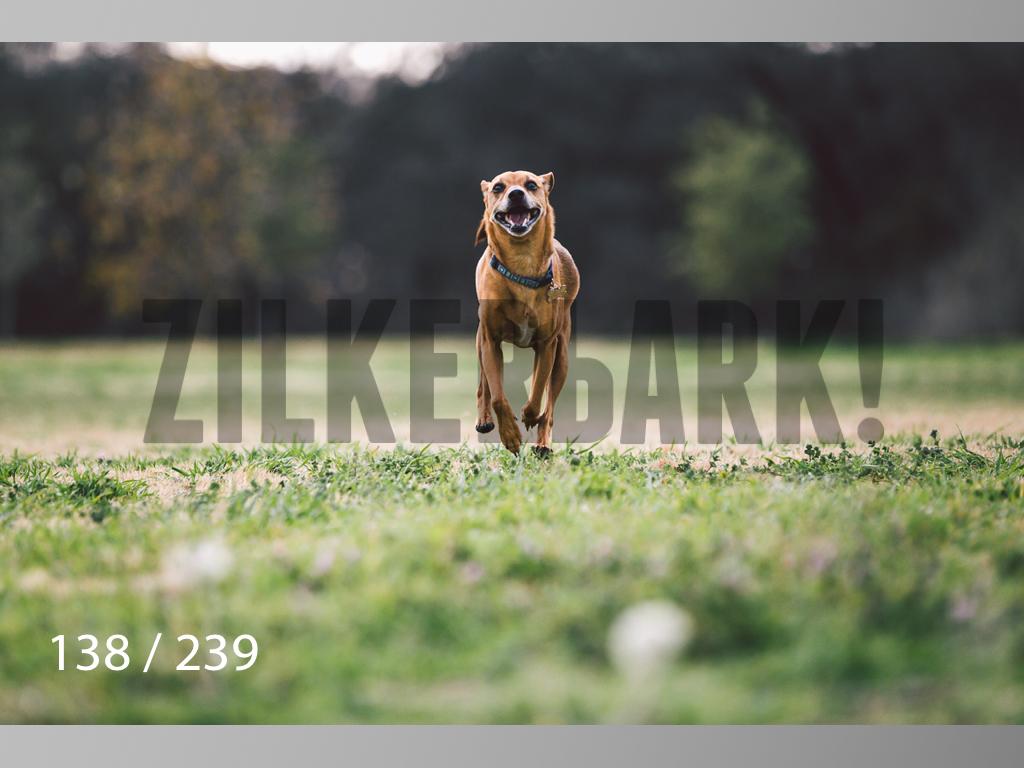 2.20 Dogs-138.jpg
