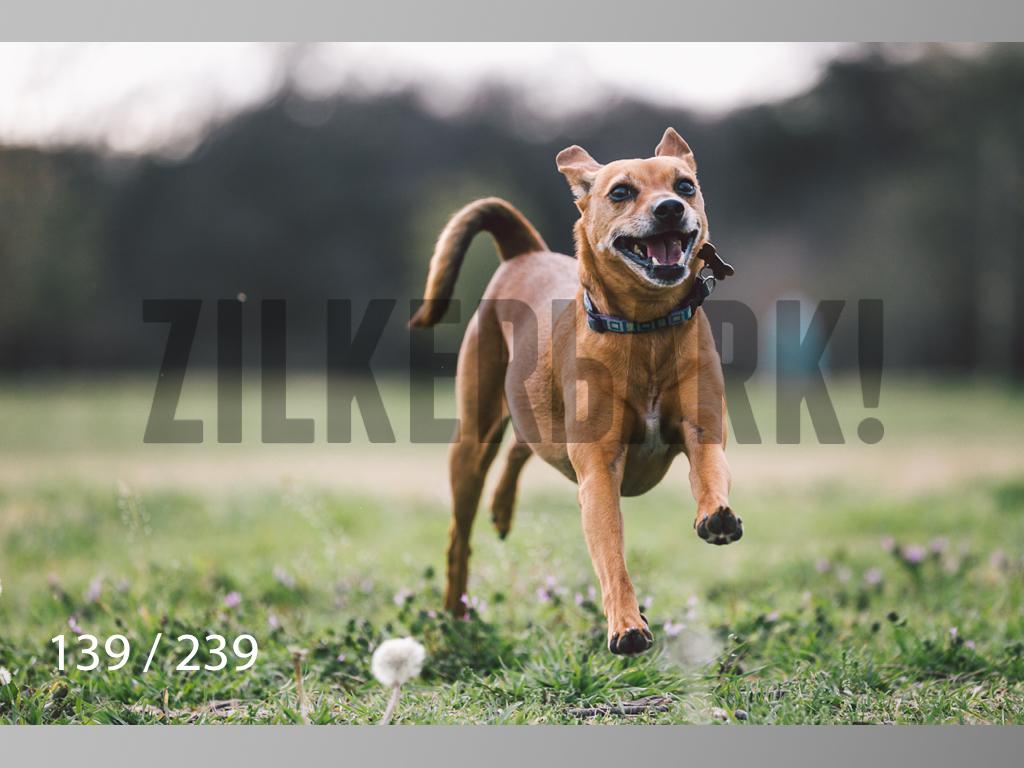 2.20 Dogs-139.jpg