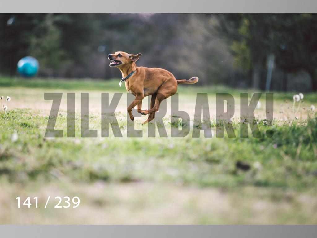 2.20 Dogs-141.jpg