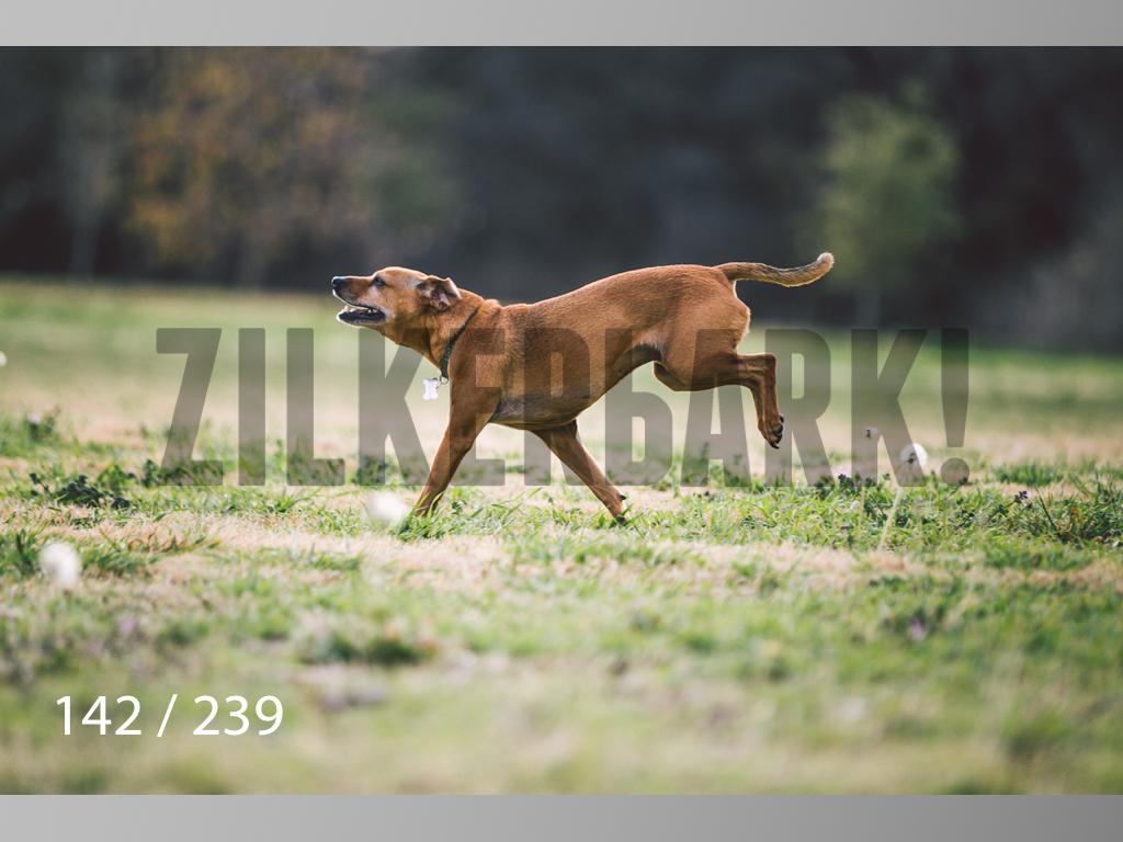 2.20 Dogs-142.jpg