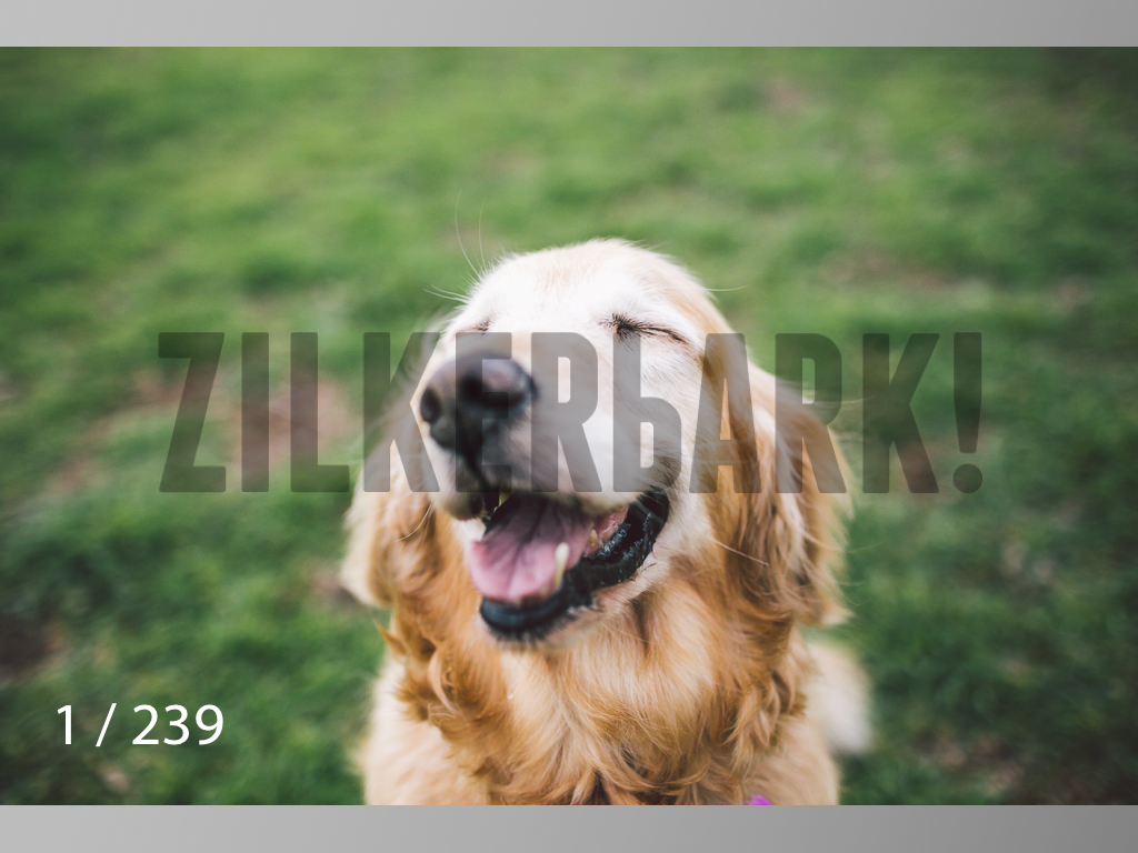 2.20 Dogs-001.jpg