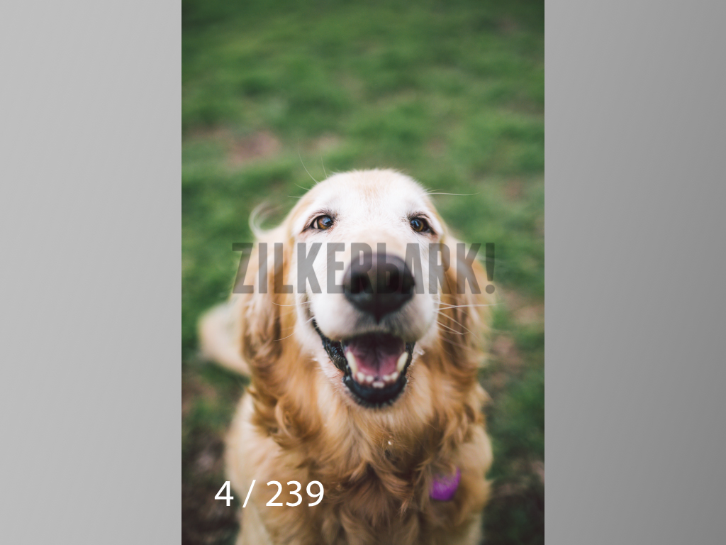 2.20 Dogs-004.jpg