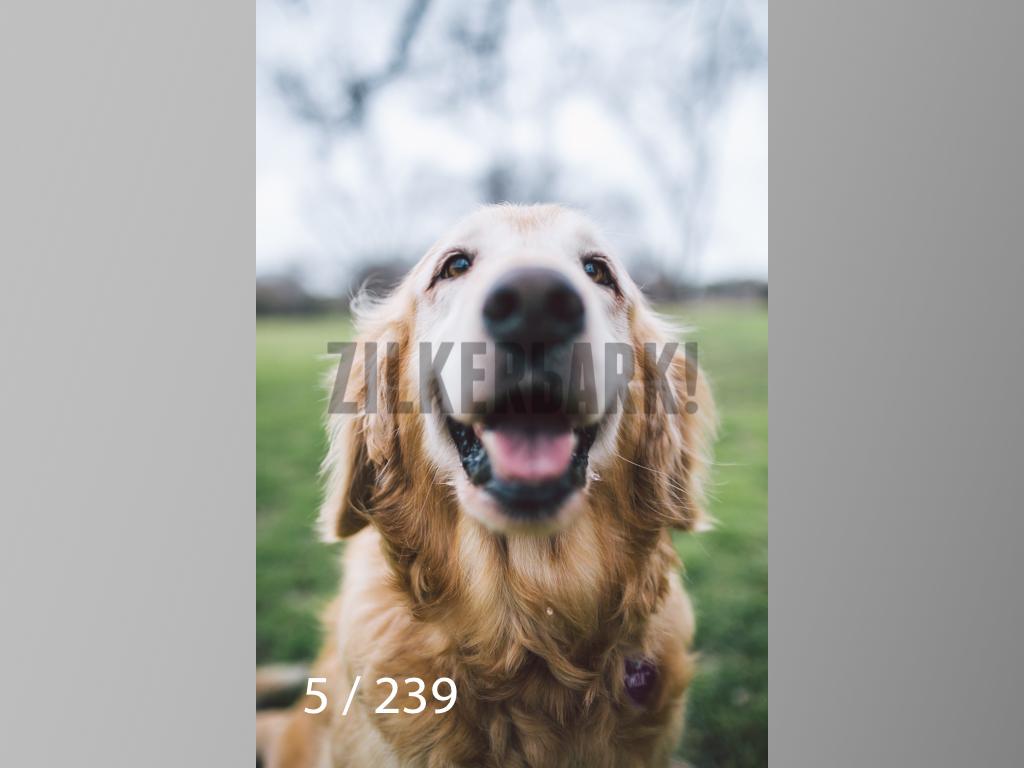 2.20 Dogs-005.jpg