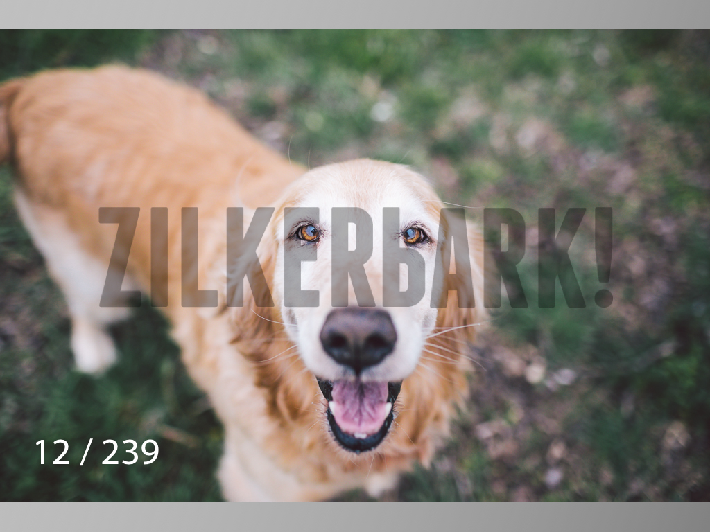 2.20 Dogs-012.jpg