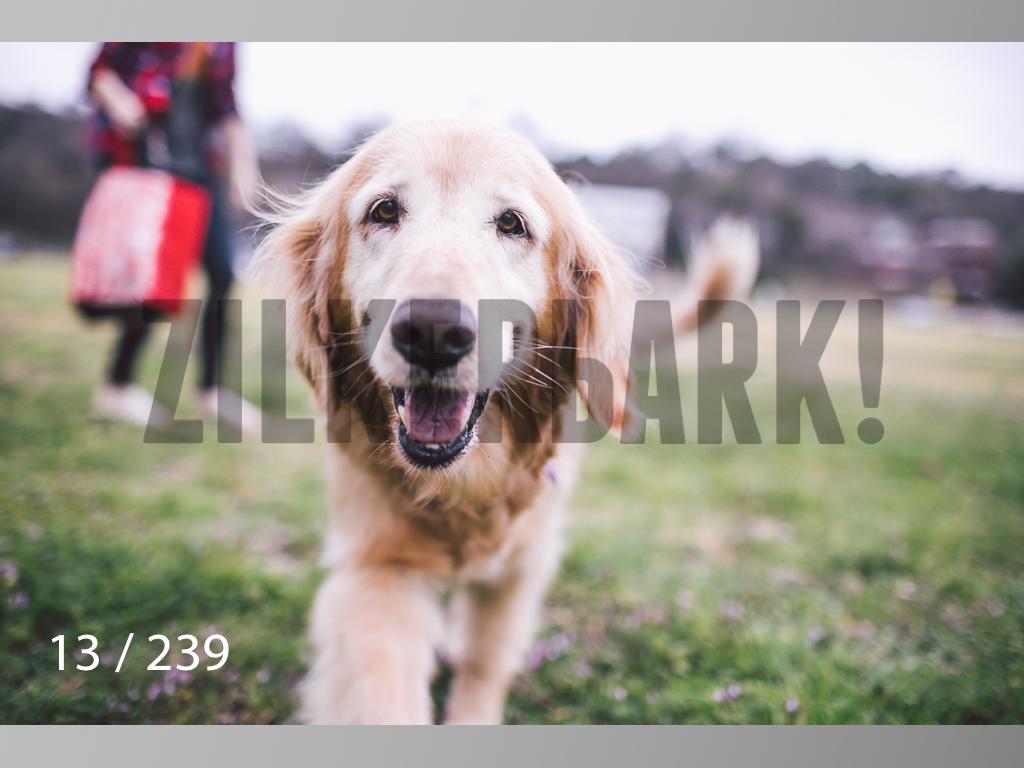 2.20 Dogs-013.jpg