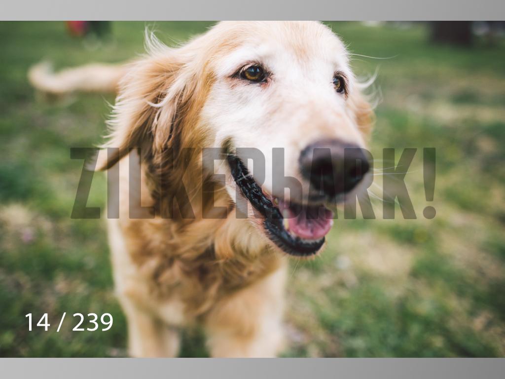 2.20 Dogs-014.jpg