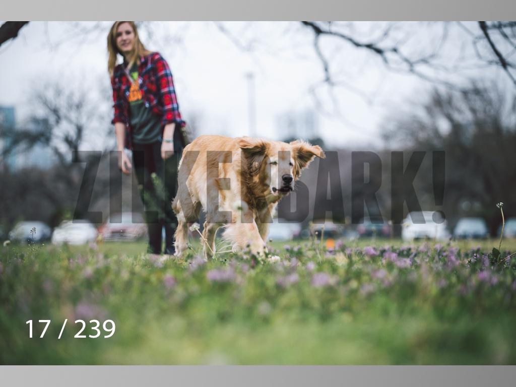 2.20 Dogs-017.jpg