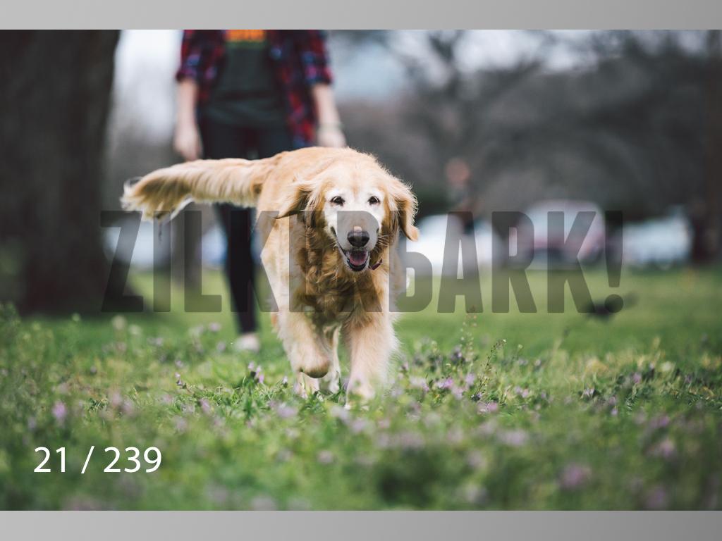 2.20 Dogs-021.jpg