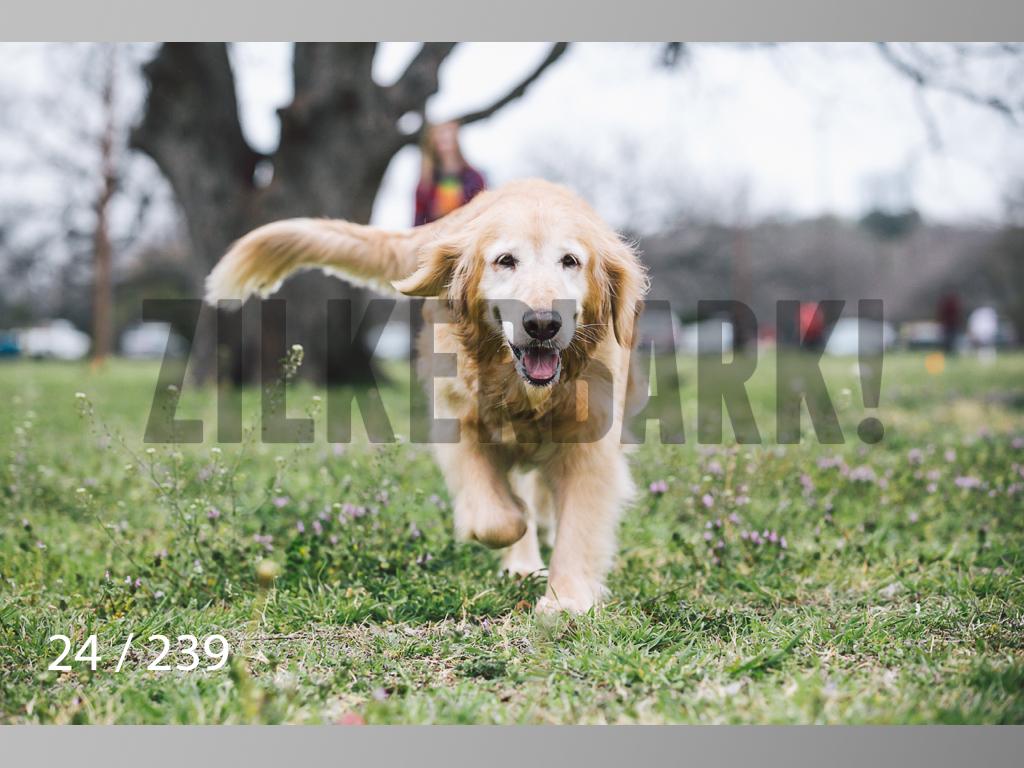 2.20 Dogs-024.jpg