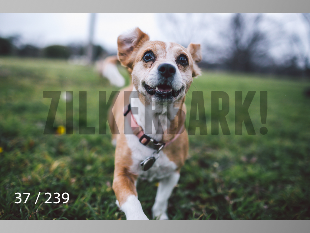 2.20 Dogs-037.jpg