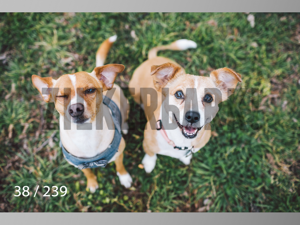 2.20 Dogs-038.jpg