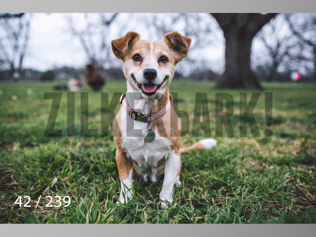 2.20 Dogs-042.jpg
