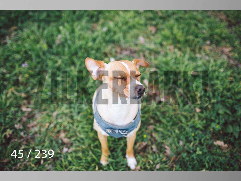 2.20 Dogs-045.jpg