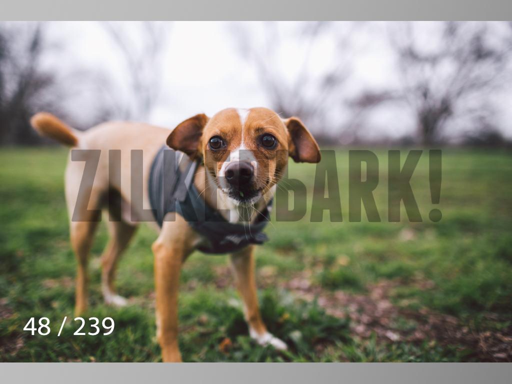 2.20 Dogs-048.jpg