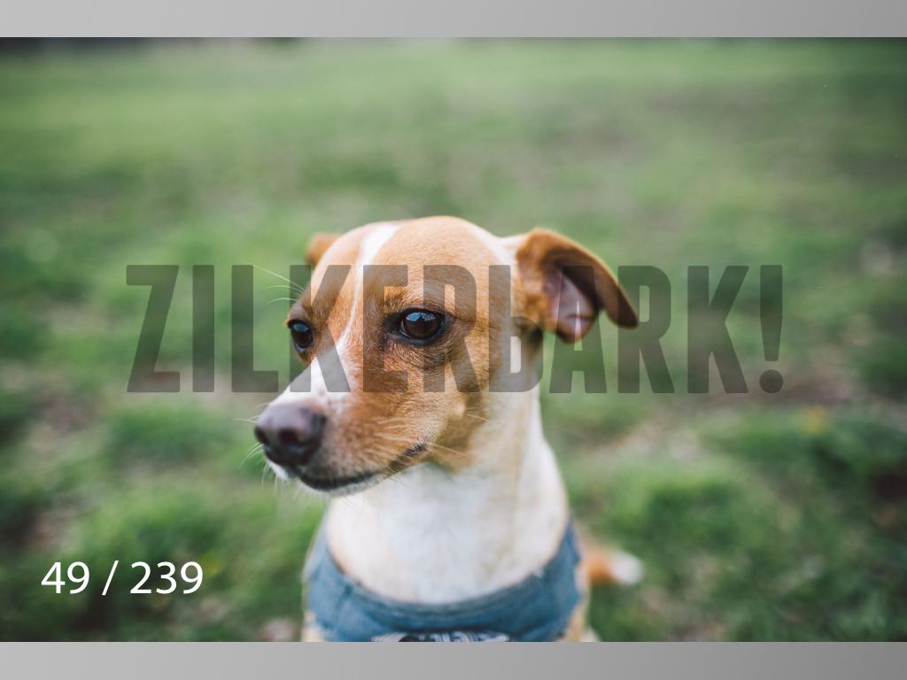 2.20 Dogs-049.jpg