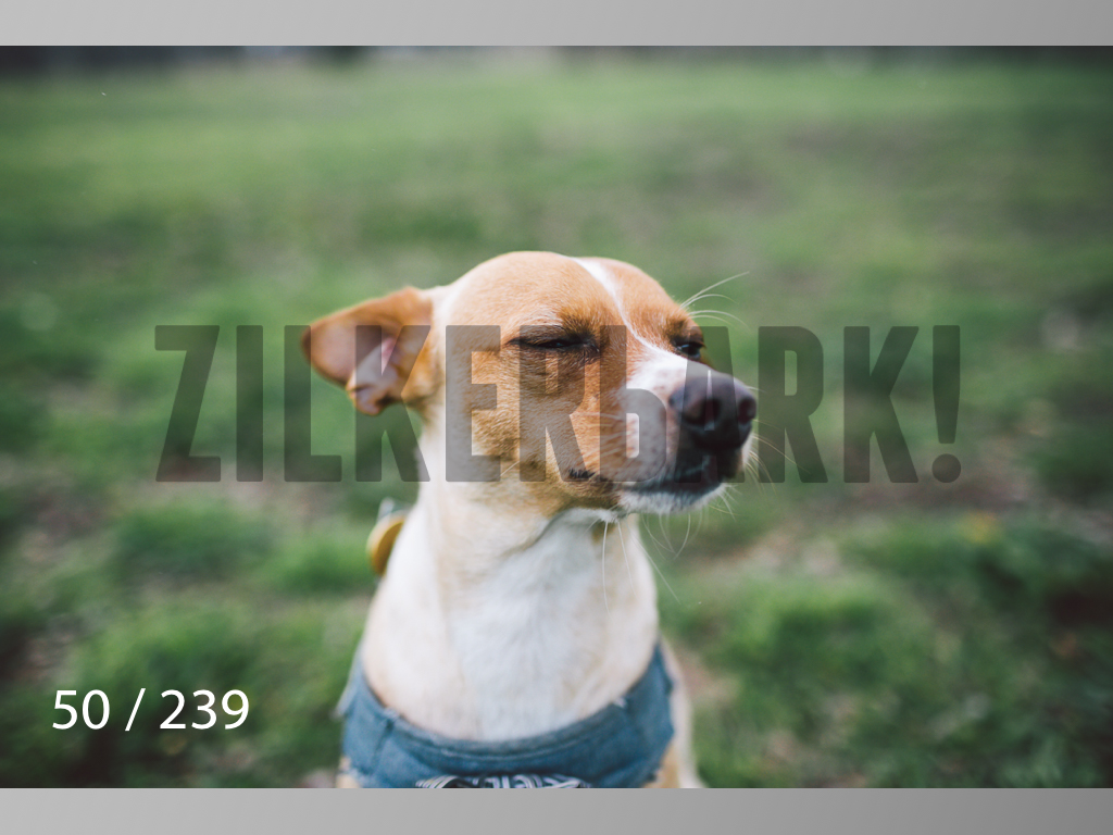 2.20 Dogs-050.jpg
