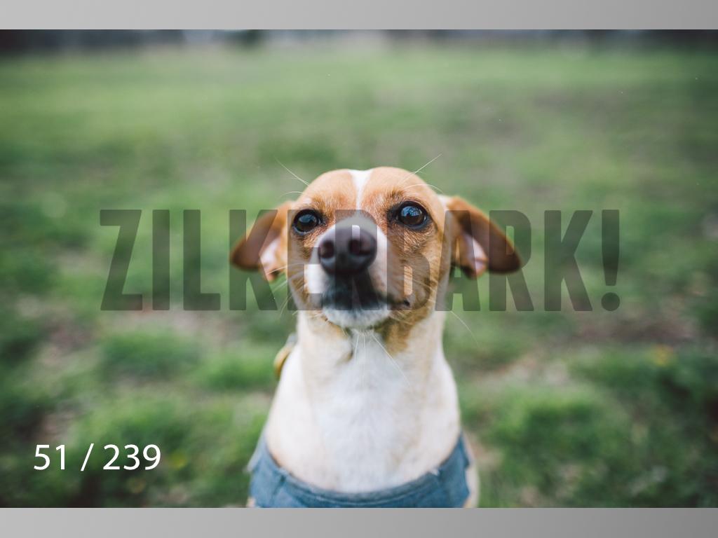 2.20 Dogs-051.jpg