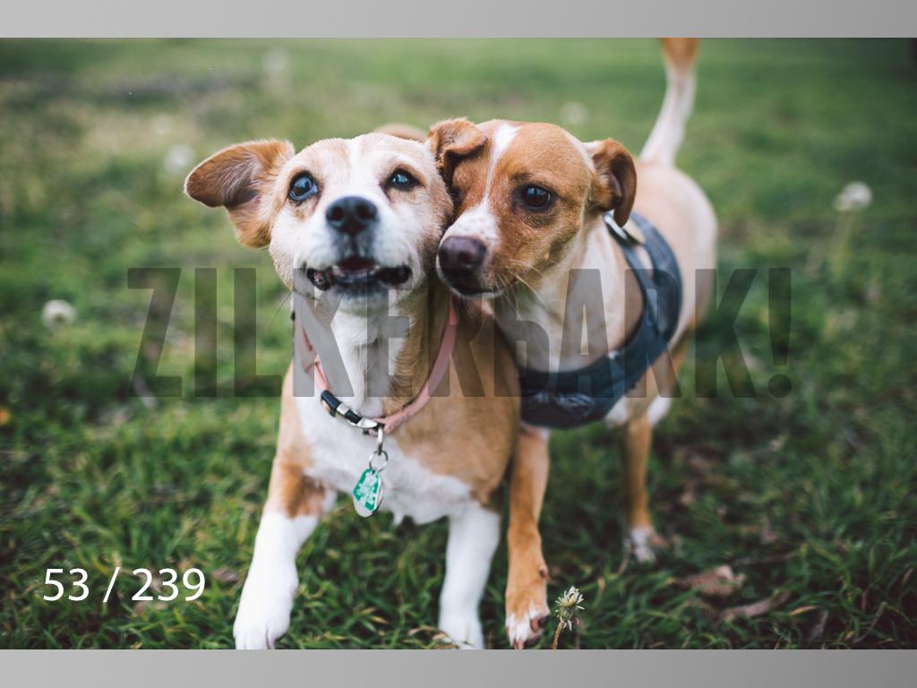 2.20 Dogs-053.jpg