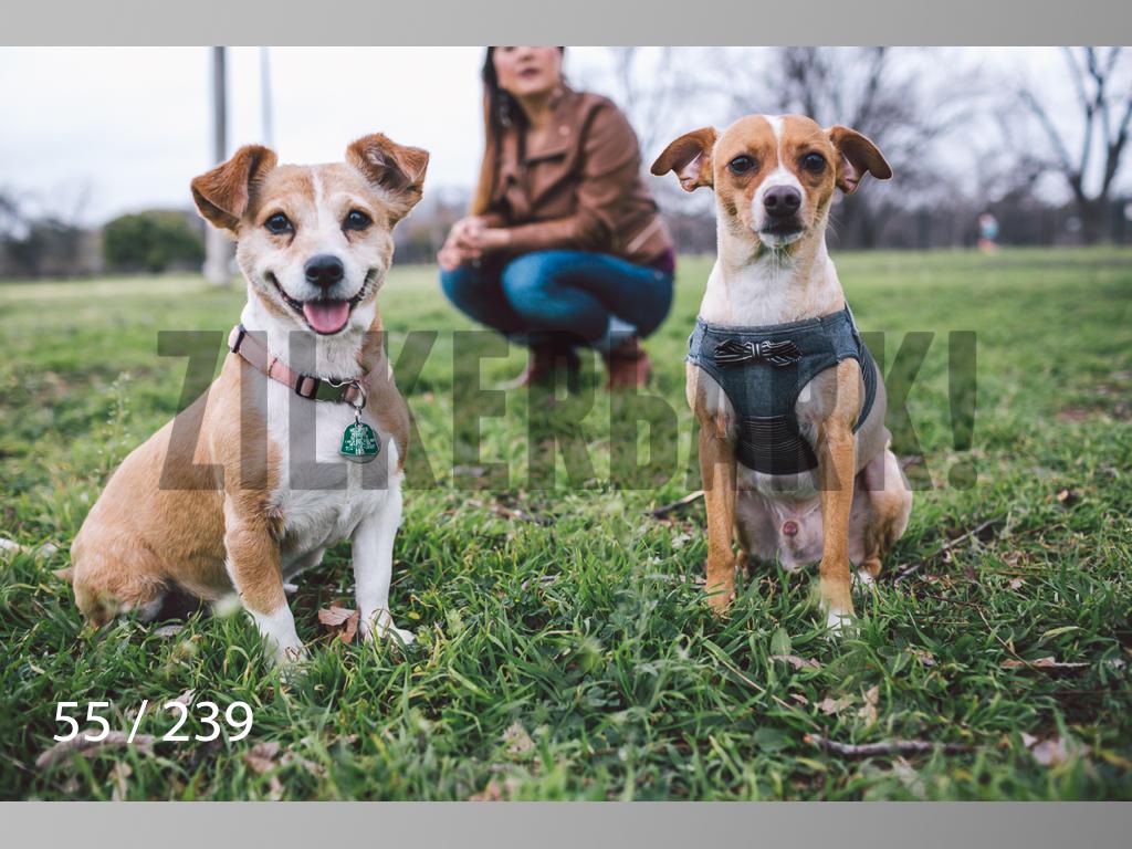 2.20 Dogs-055.jpg
