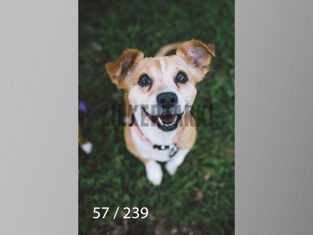 2.20 Dogs-057.jpg