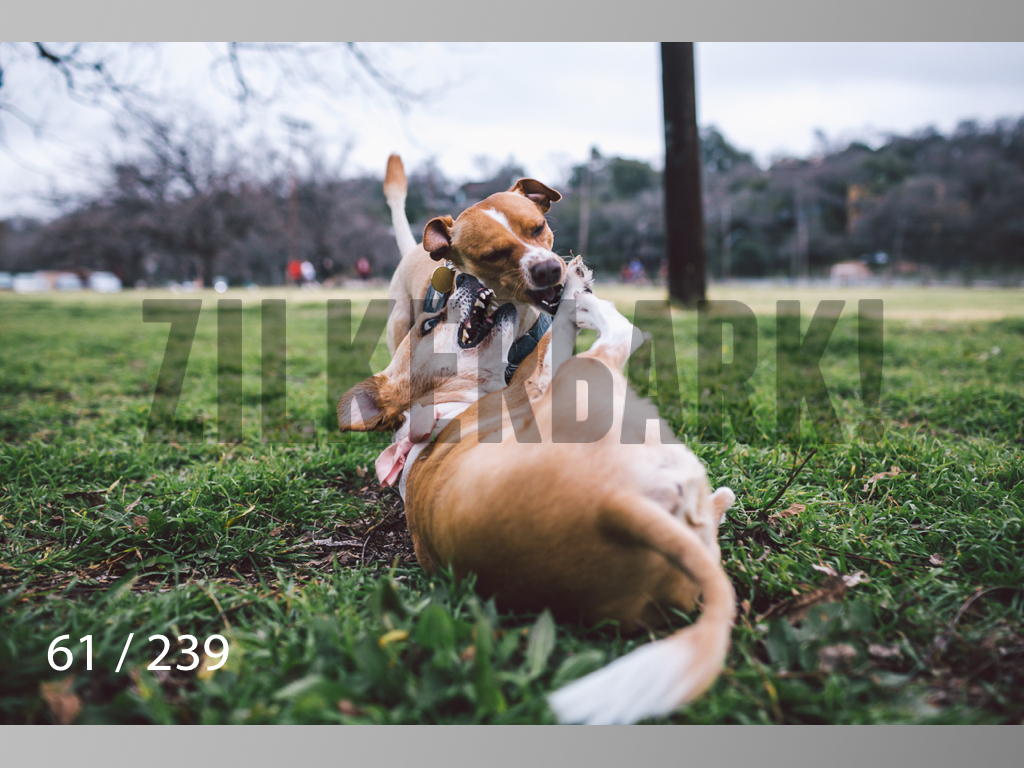 2.20 Dogs-061.jpg