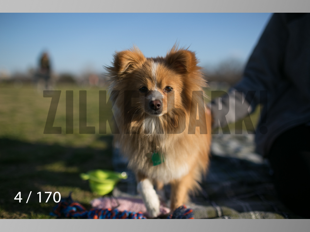 Feb Dogs-004.jpg
