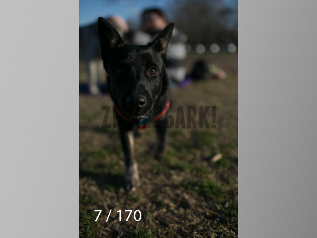 Feb Dogs-007.jpg