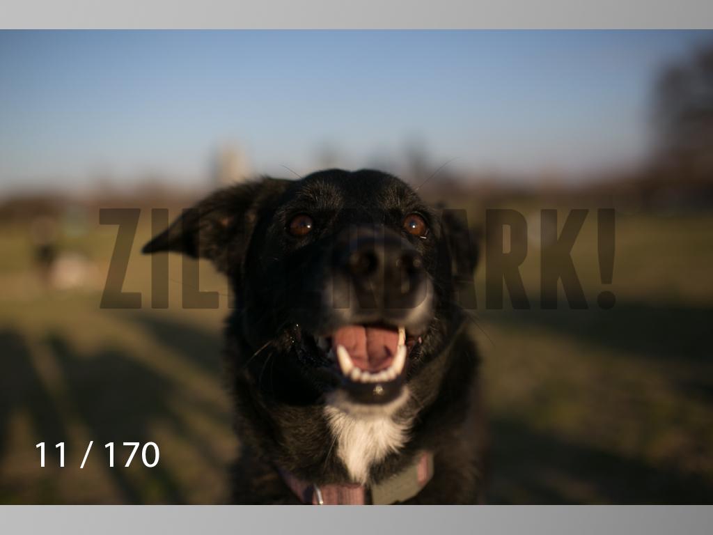 Feb Dogs-011.jpg