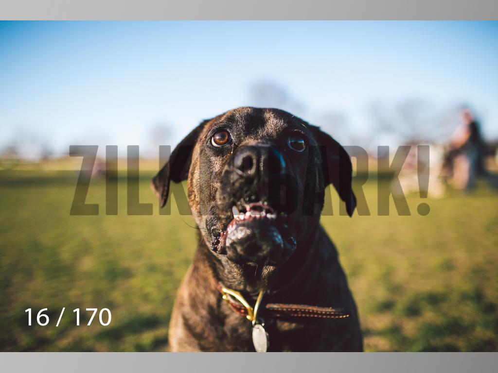 Feb Dogs-016.jpg