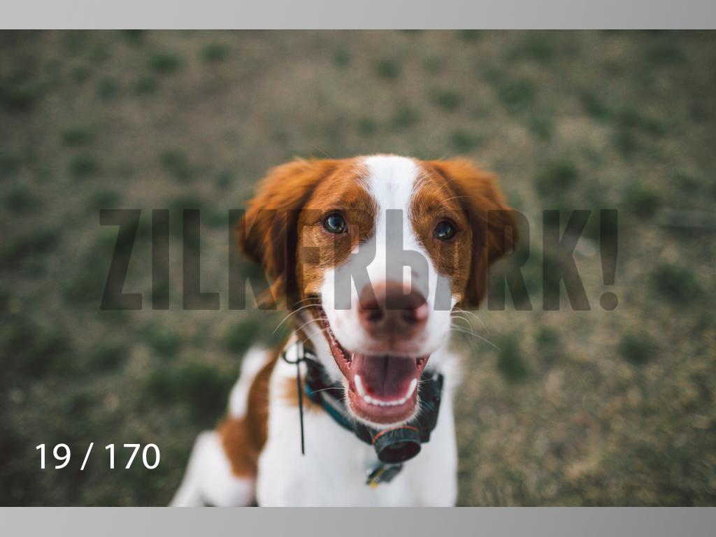 Feb Dogs-019.jpg