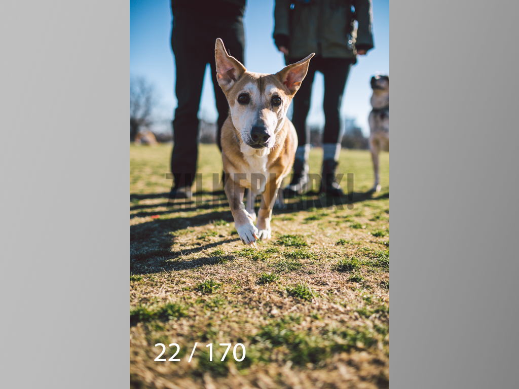 Feb Dogs-022.jpg