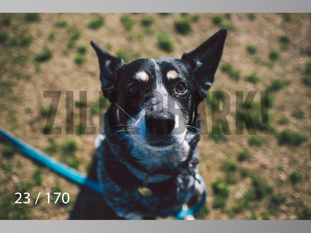 Feb Dogs-023.jpg