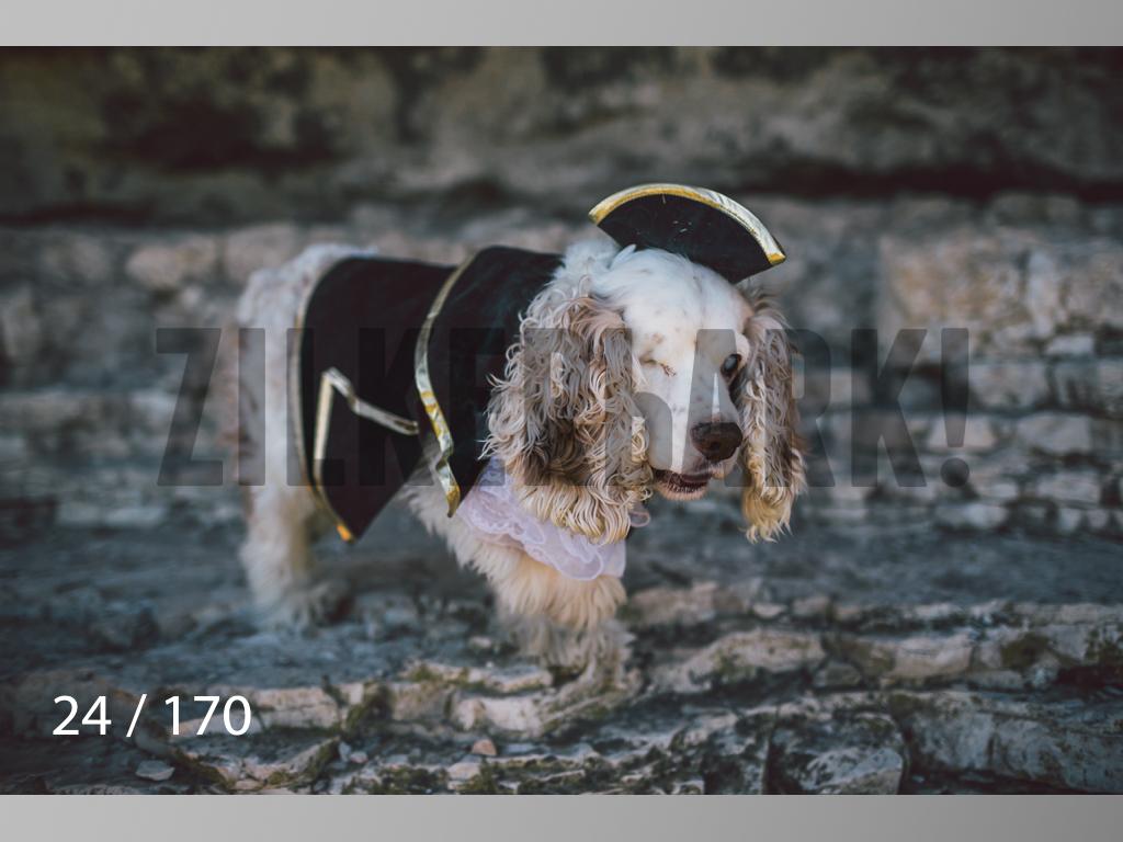 Feb Dogs-024.jpg