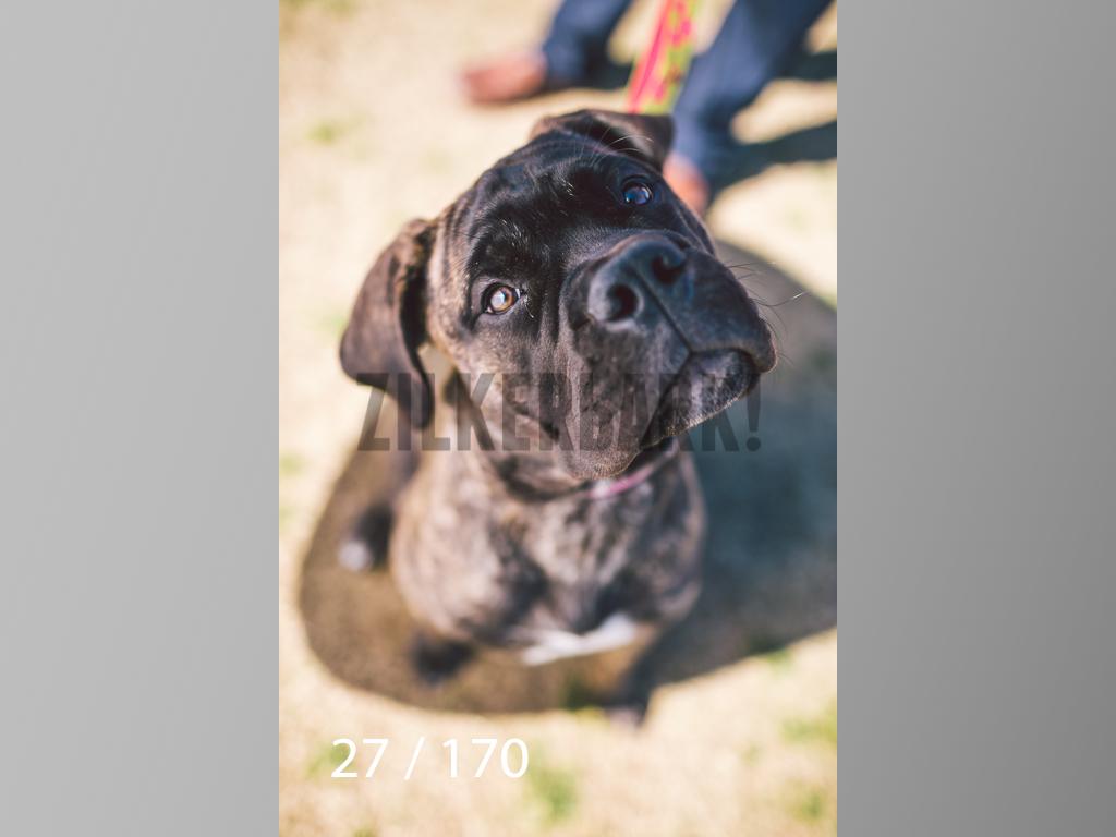 Feb Dogs-027.jpg