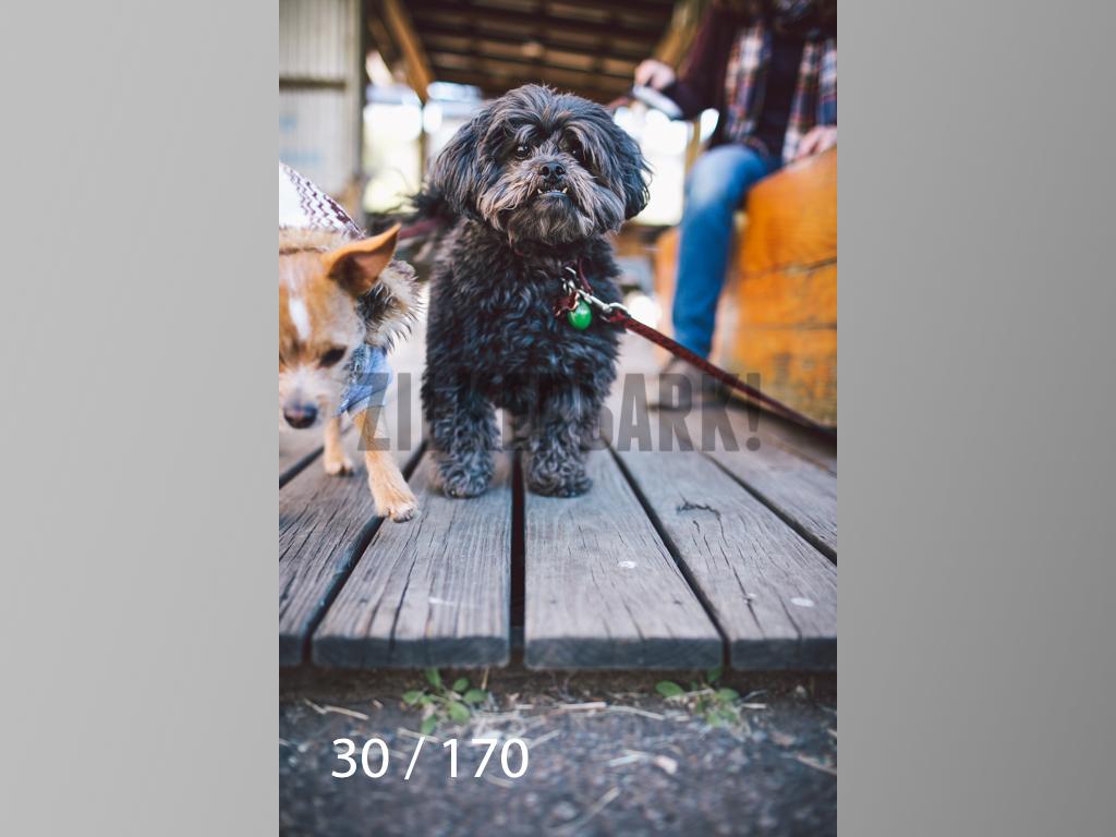 Feb Dogs-030.jpg
