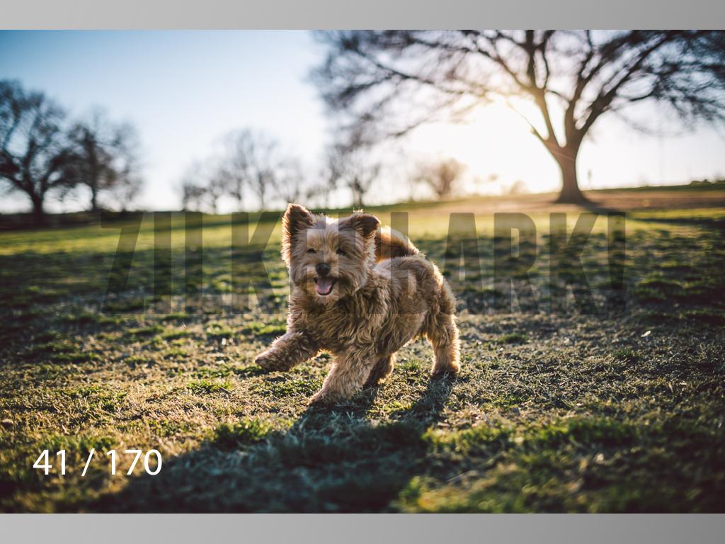 Feb Dogs-041.jpg