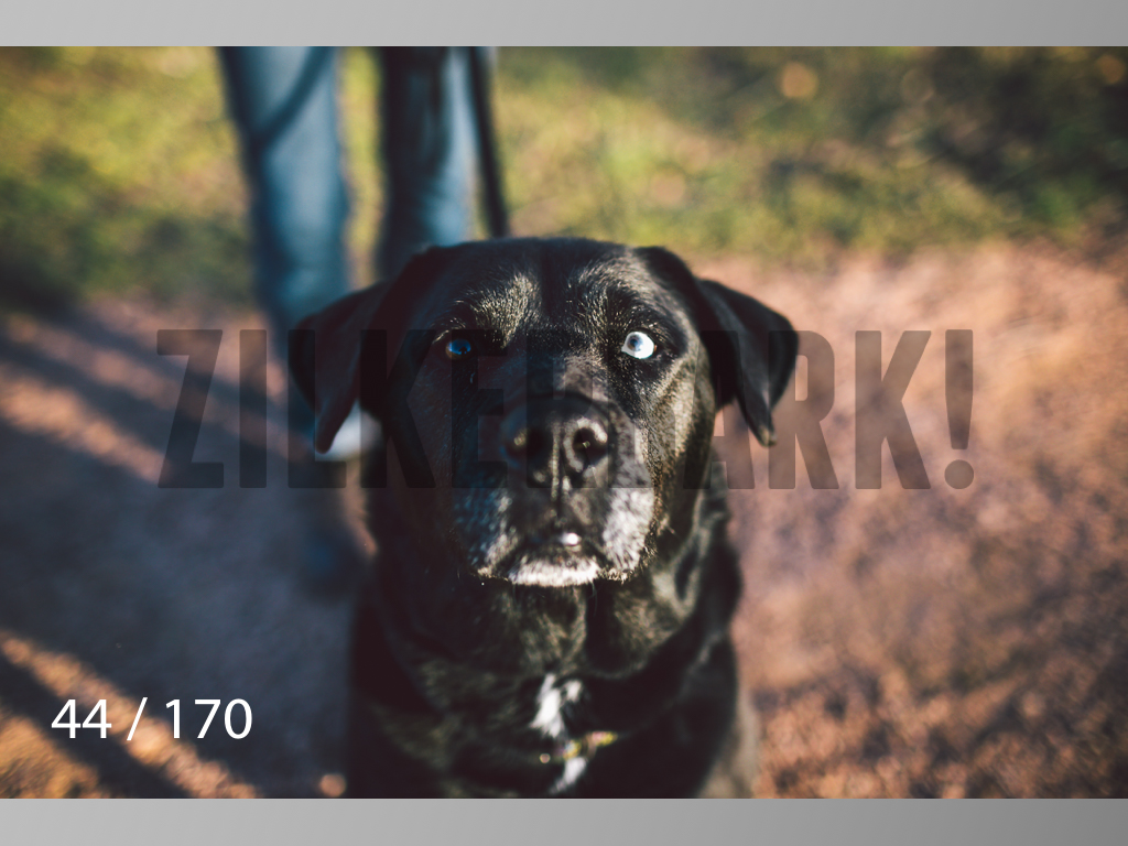 Feb Dogs-044.jpg